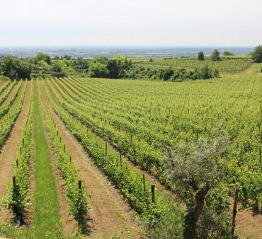 Valpolicella Grand Tour: the tour of a wine in a tour
