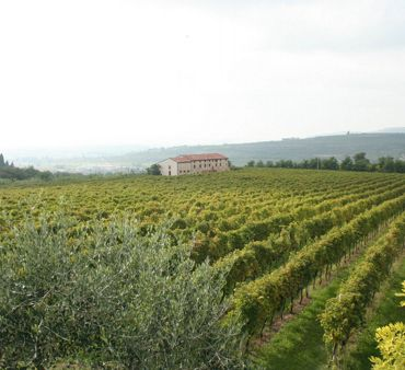 A taste of Valpolicella: <br> wines at 0 km