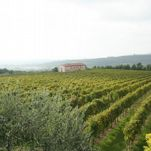 GUIDED TOURS IN THE VINEYARDS